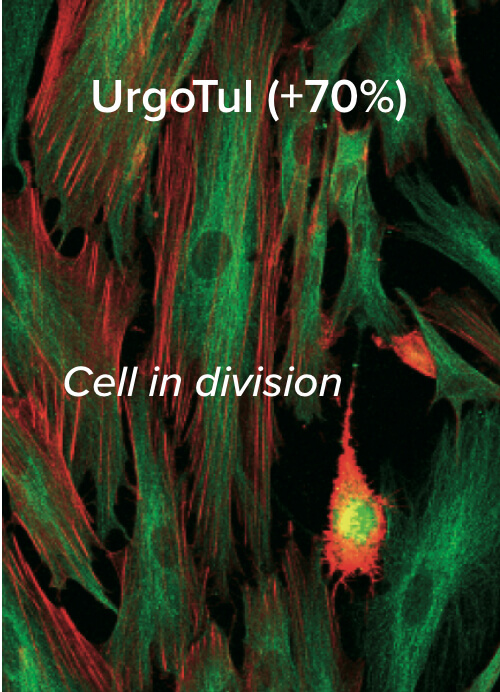 Urgotal in cell division.